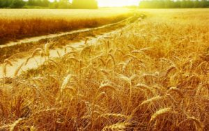 оспорим кадастровую стоимость земли